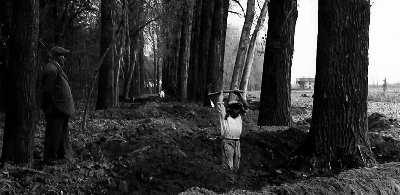 Abbattimento alberi per segheria