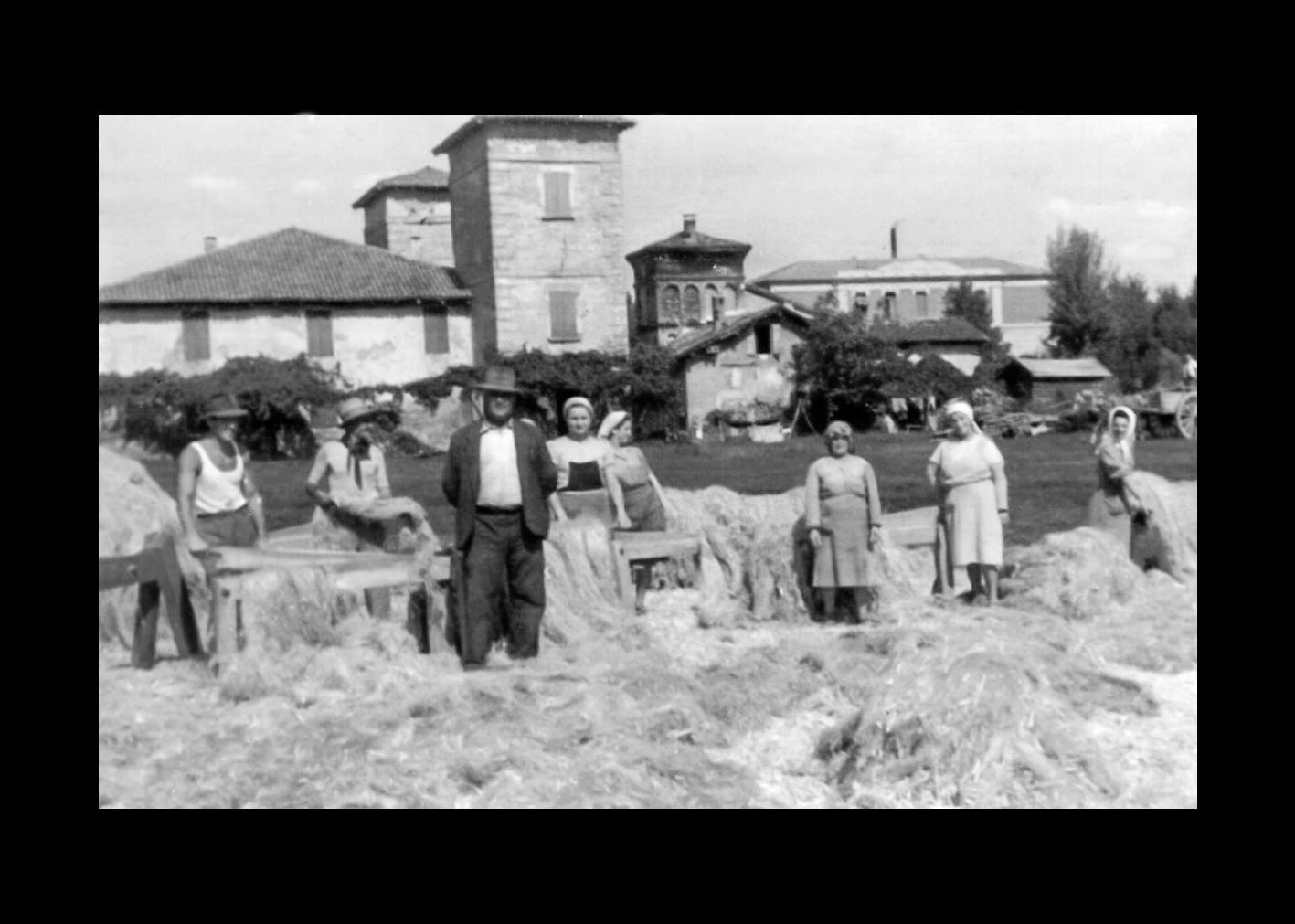 Gramolatura canapa nella tenuta Fenati