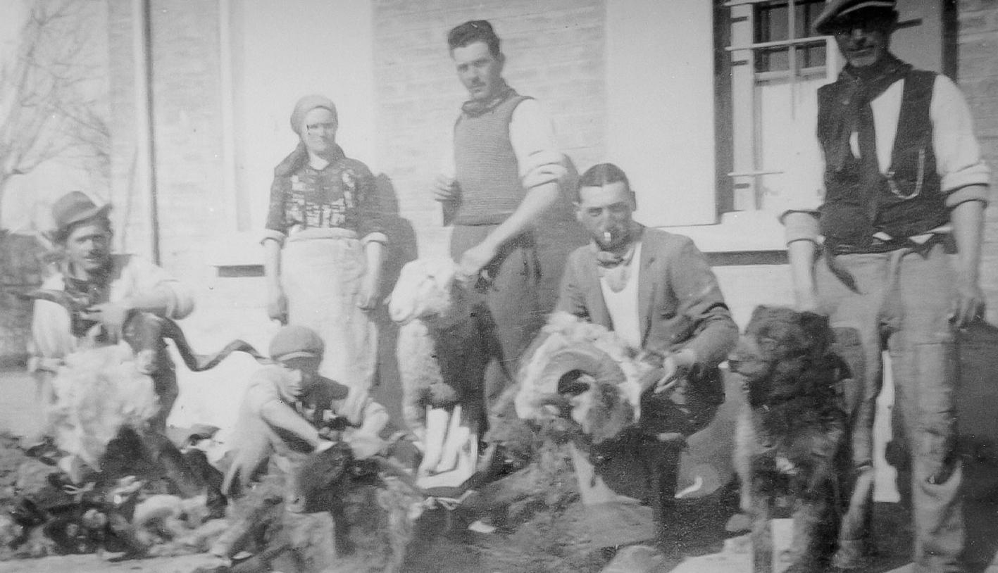 Tosatura degli ovini