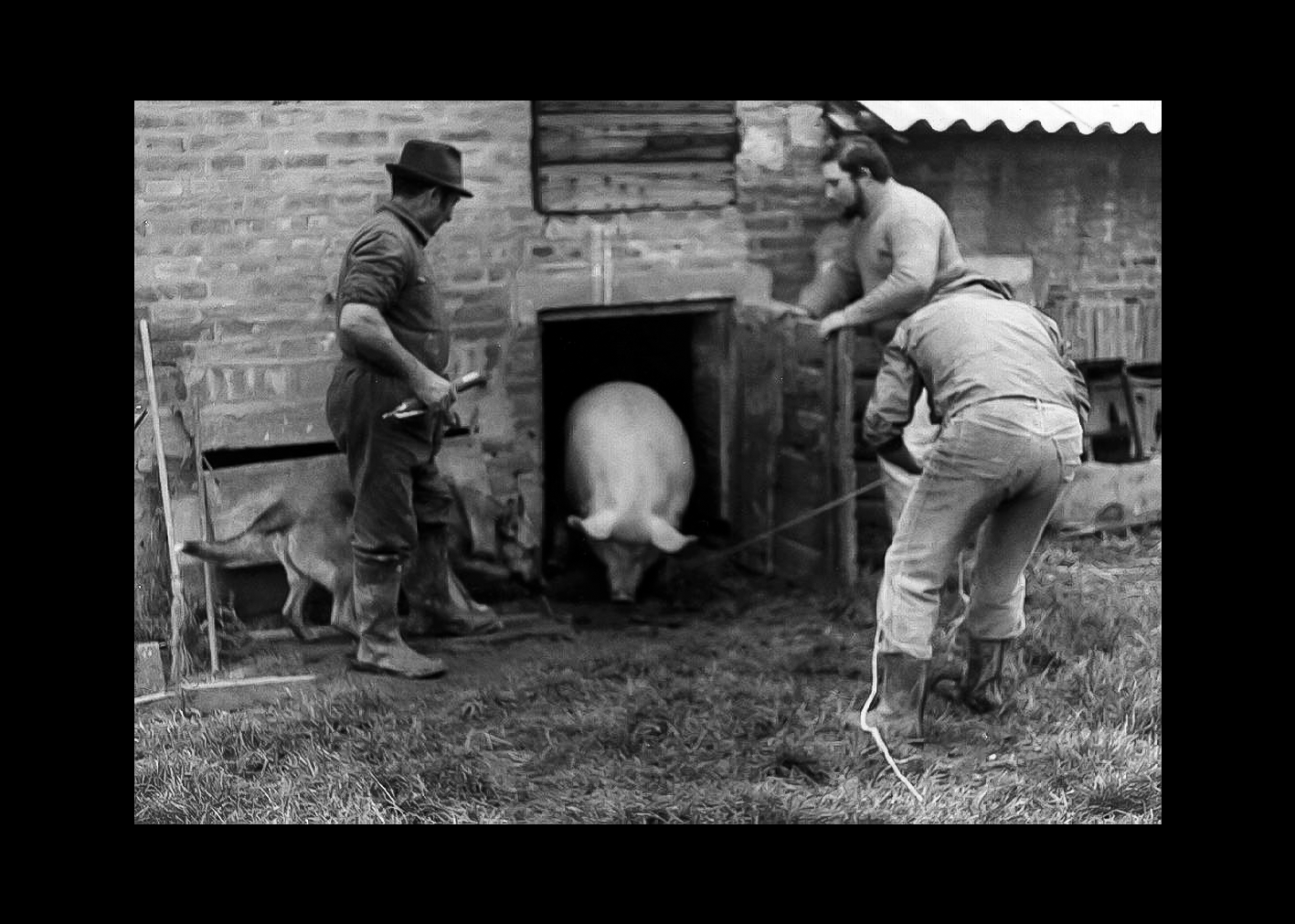 Uccisione del maiale