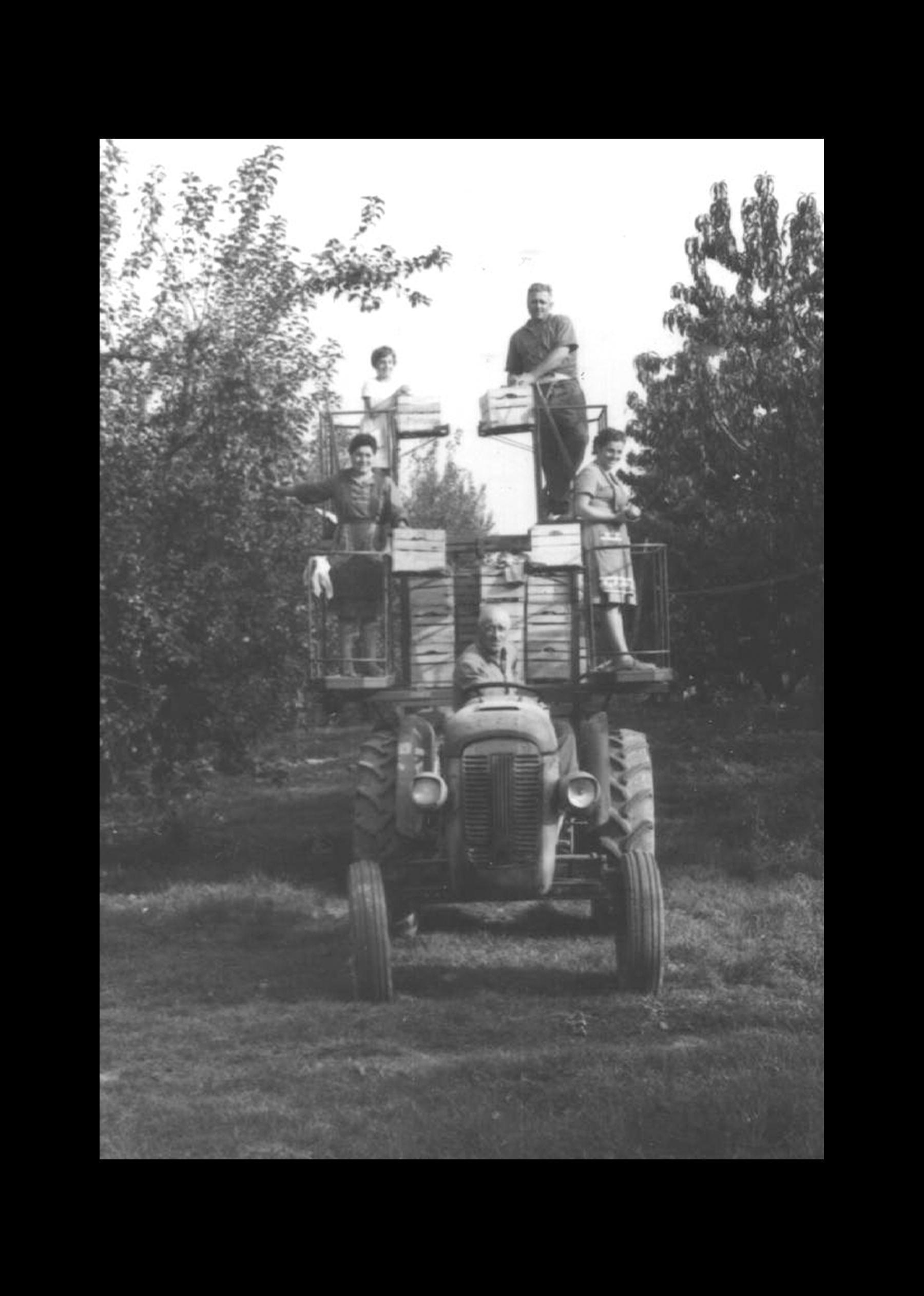 Raccolta della frutta con carro raccolta